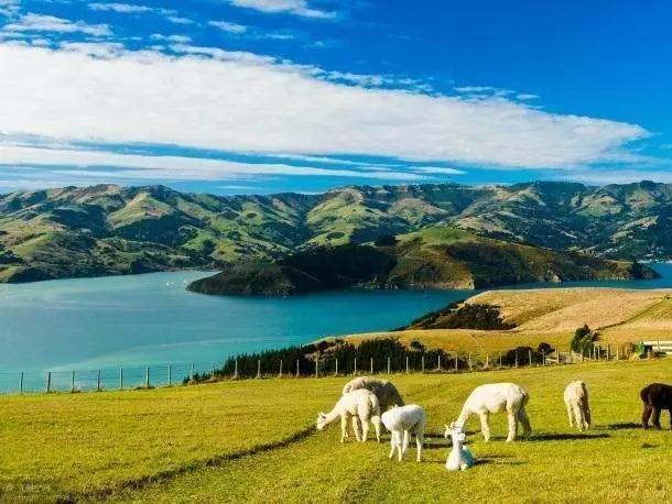 为什么选择新西兰,福利大汇总